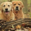 Now a Social Network for Dog Lovers