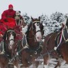 Budweiser Clydesdales to Return for Super Bowl 2015