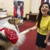 Lassie Urges Congress to Protect Kids from Disaster