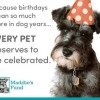Celebrating Birthday of Homeless Pets