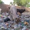Is Arvind Kejriwal an Enemy of Delhi?