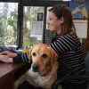 How to Take Your Dog to the Workplace