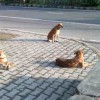 Welcome to the Smart City of Stray Dogs