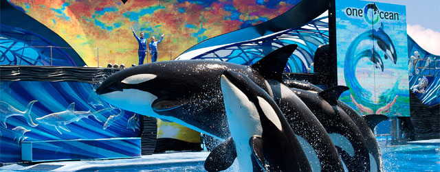 SeaWorld Debuts New Whale Show: One Ocean