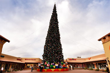 America's Tallest Fresh-Cut Christmas Tree Arrives