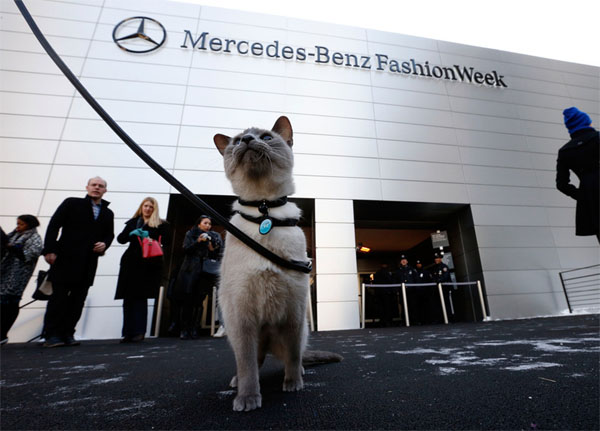Cat at Fashion Week
