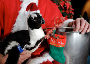Real Wild Animals Released Christmas Video