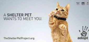 When Shelter Pets Appear in TV Ads