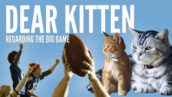 Cat 'Survival Guide' for the Big Game