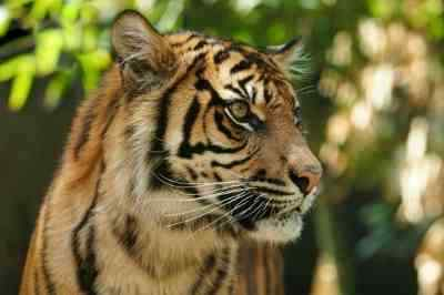 Earth Day Campaign to Save Sumatran Wildlife