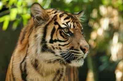 Earth Day Campaign to Save Sumatran Wildlife