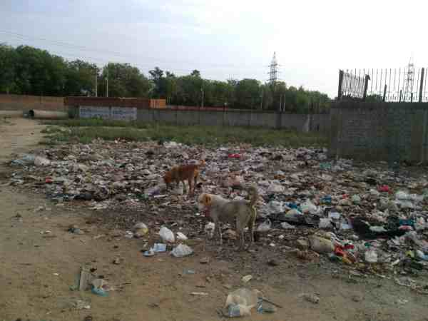 Stinking site where only stray dogs can live. But it is near a populated residential area.