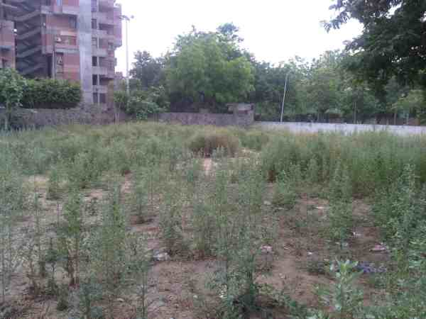 This place in Delhi is supposed to be a green park. But wasteful weed is growing here. Humans stay away from it.