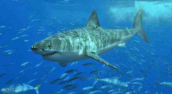 Shark Attacks: How to Stay Safe in Beach Waters