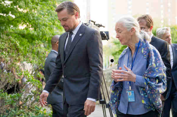 UN Messengers of Peace Leonardo DiCaprio and Jane Goodall at the annual Peace Bell Ceremony held at UN headquarters in observance of the International Day of Peace. UN Photo / Rick Bajornas
