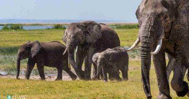 Victory for Elephants: China to Close Domestic Ivory Markets