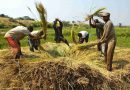 Economic Uncertainties to Influence Food Markets: FAO