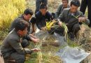 Drought in North Korea Threatens Food Supply: FAO