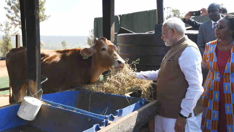 "The Prime Minister, Shri Narendra Modi donates 200 cows under ""Girinka"" (one cow per poor family programme), at Rweru Model village, in Rwanda on July 24, 2018."