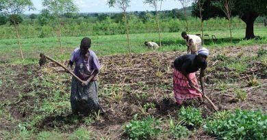 Women work the fields in Uganda. Photo: Maggie Roth for IUCN