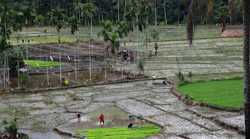 Photo: IUCN