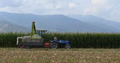 Global Food Prices Rise at Rapid Pace: FAO