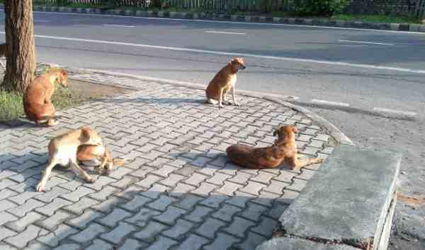 Stray dogs are spreading filth in Delhi