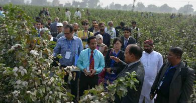 IAEA support, including training, workshops and fellowships as well as practical lectures such as this one in Pakistan, have contributed to building the national capacity in cotton breeding techniques. (Photo: L. Jankuloski/Joint FAO/IAEA)