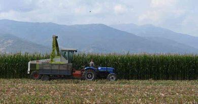 Maize Growing in North Macedonia. Photo: FAO